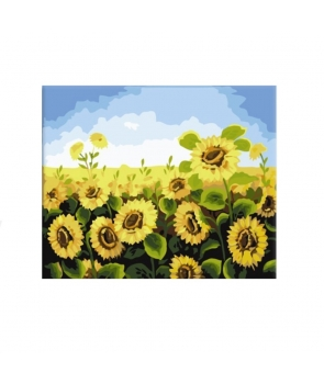 Set pictura pe numere Floarea Soarelui