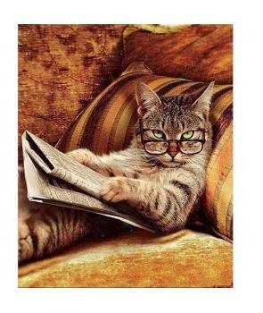 Set pictura pe numere Pisica cea curioasa, 40*50cm